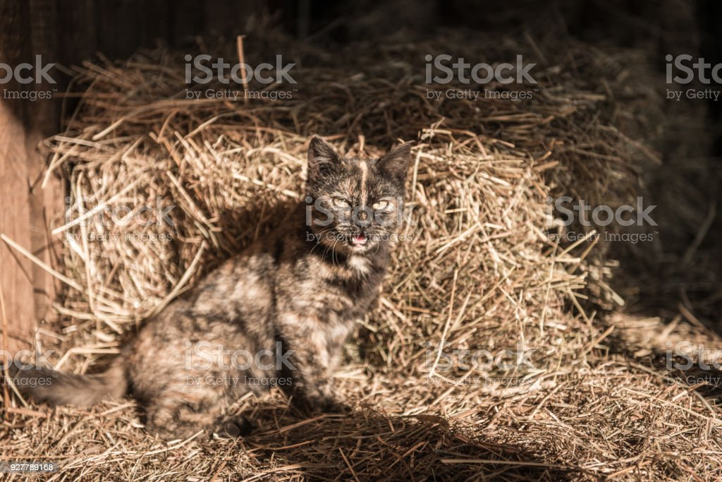 The Cat in the Haystack